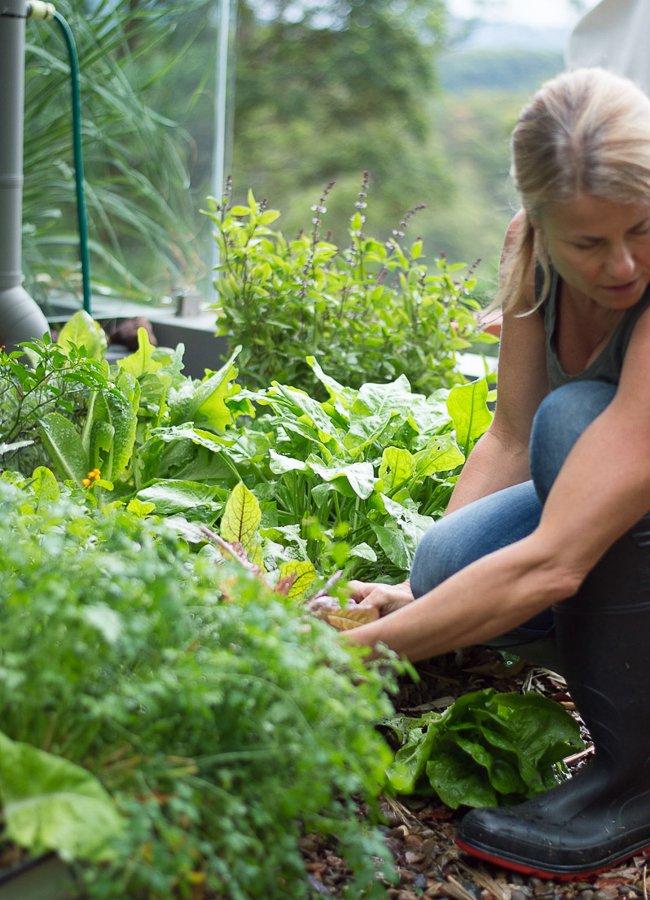 healing-herb-garden