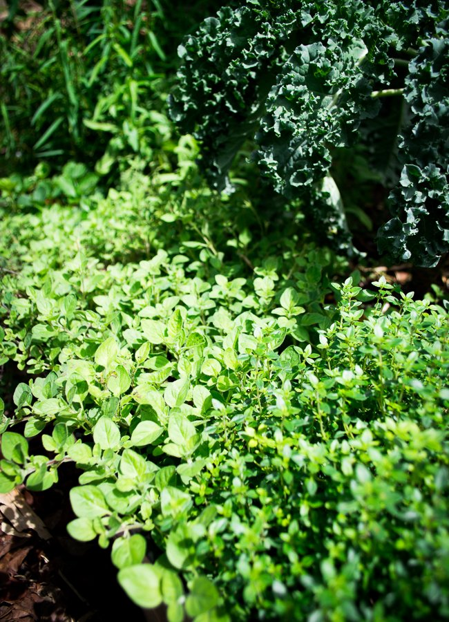 why-you-need-a-healing-herb-garden