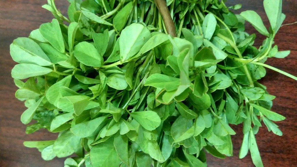 fenugreek-trigonella-plants
