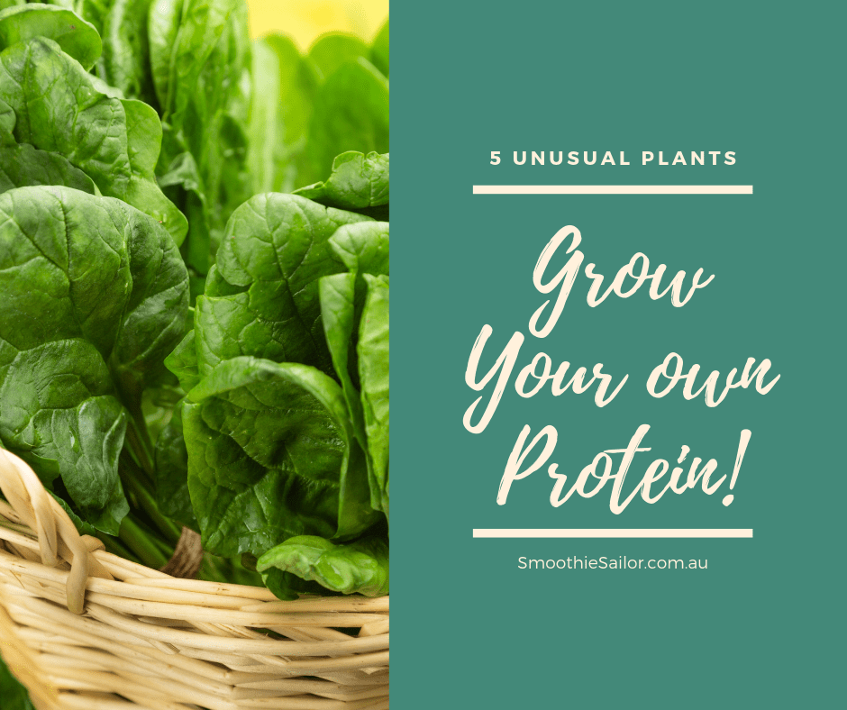 grow-your-own-high-protein-plants